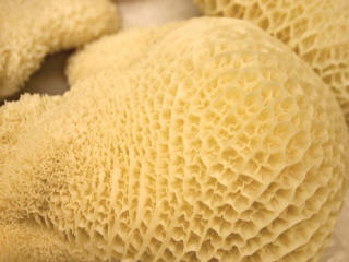 Honeycombs?